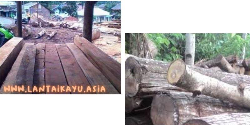 karakteristik kayu rasamala