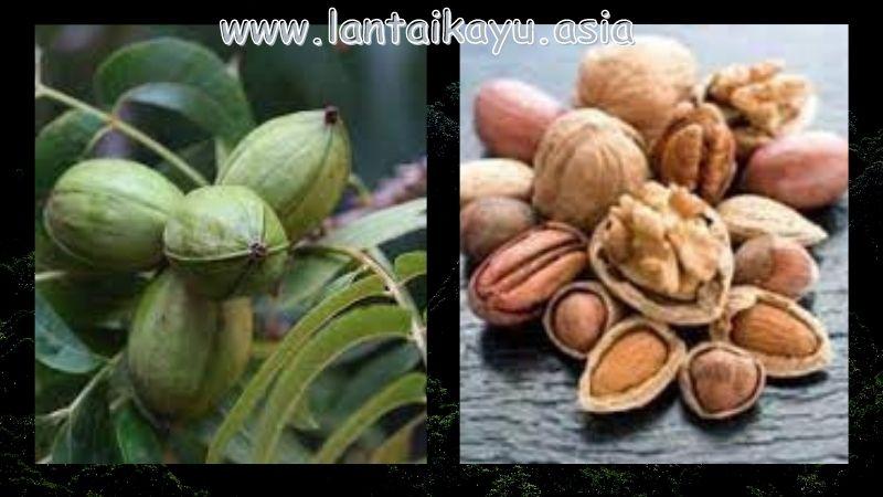 Manfaat Pohon Kenari Non Konstruksi - bahan makanan